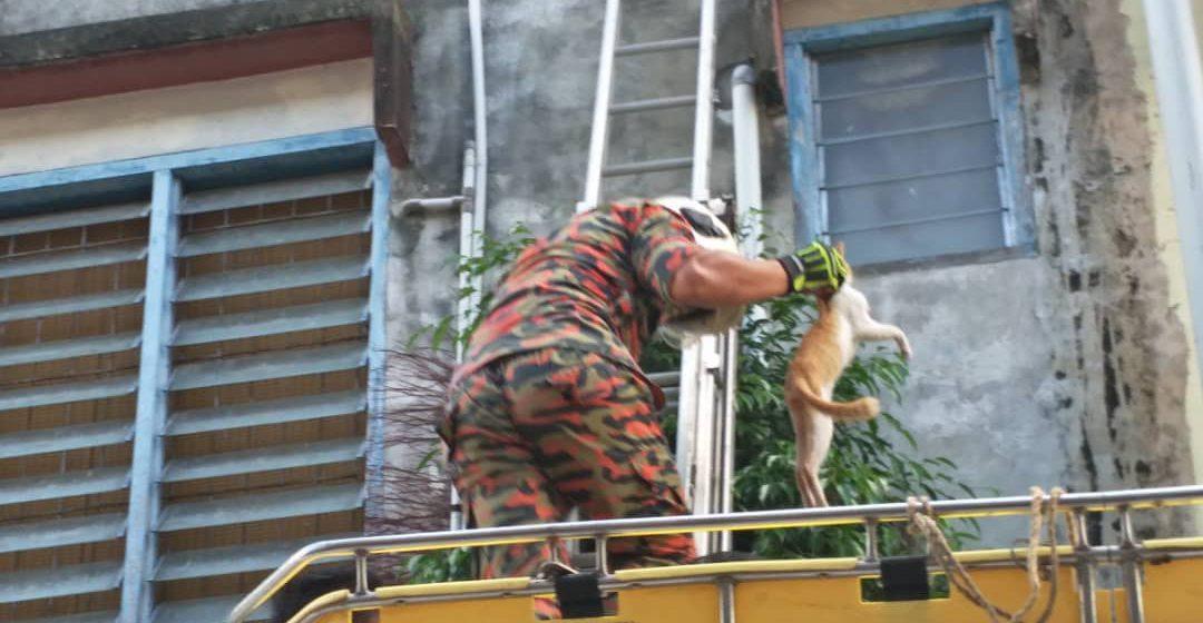 Abang Bomba selamat si meow