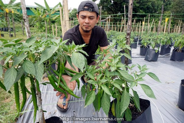 Usah gentar ceburi pertanian