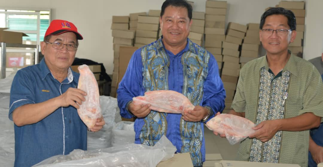 Ladang Totara Aquaculture hasilkan 6 tan ikan sebulan