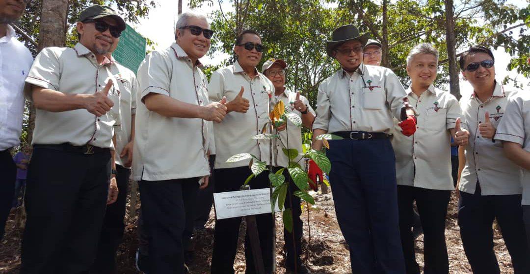 Pokok belian diisytihar warisan Sarawak