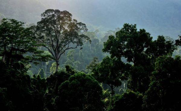 Pelihara hutan demi rakyat