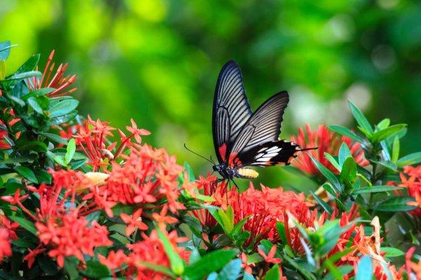 Flora, fauna diancam kepupusan