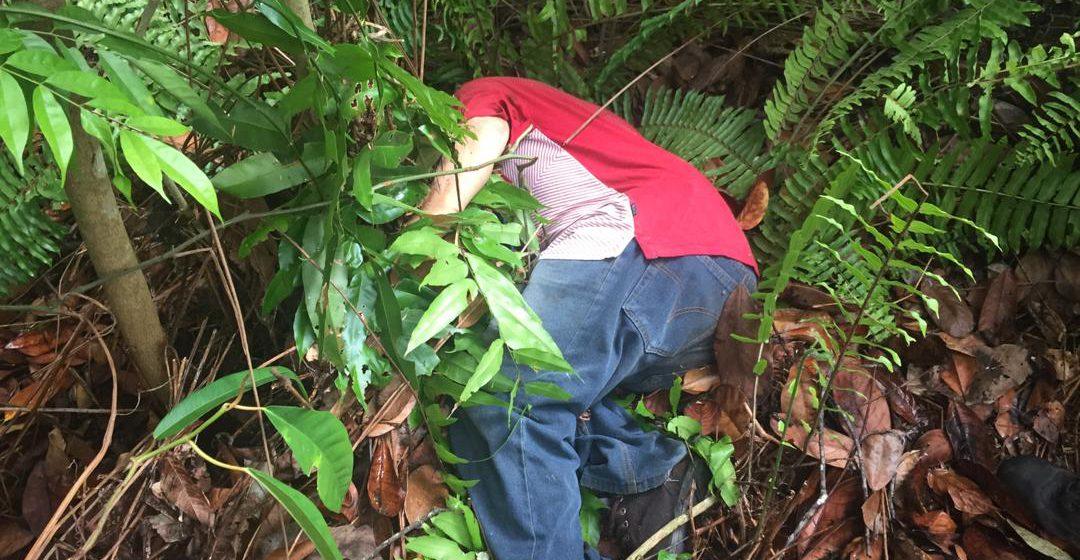 Warga emas di Miri cari sayur di hutan ditemui mati