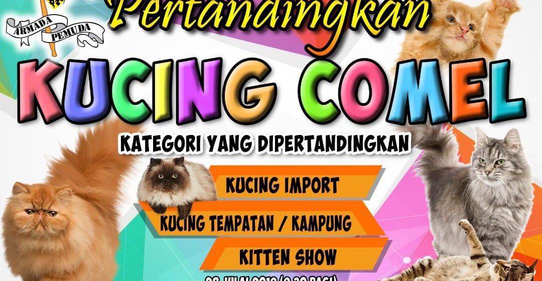 Pertandingan Kucing Comel bakal diadakan di Limbang