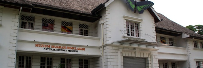Bengkel Taxidermy: Ngintu pesaka kampung