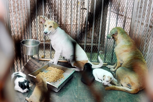 Lebih 300 kes gigitan anjing setiap bulan