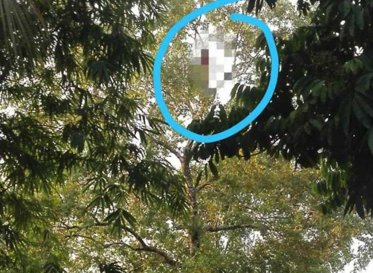 Lelaki mati tergantung  pada pokok setinggi 40 kaki