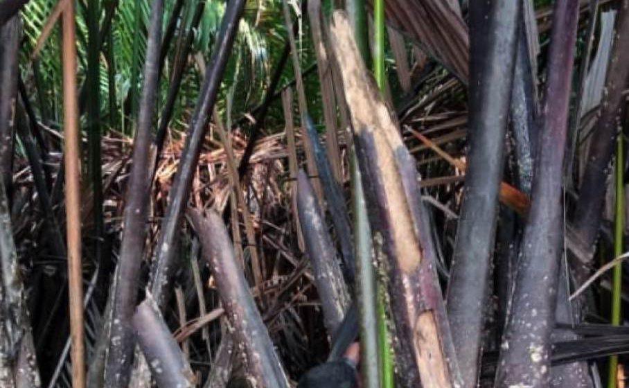 Lelaki ditemui maut di celah pokok bakau
