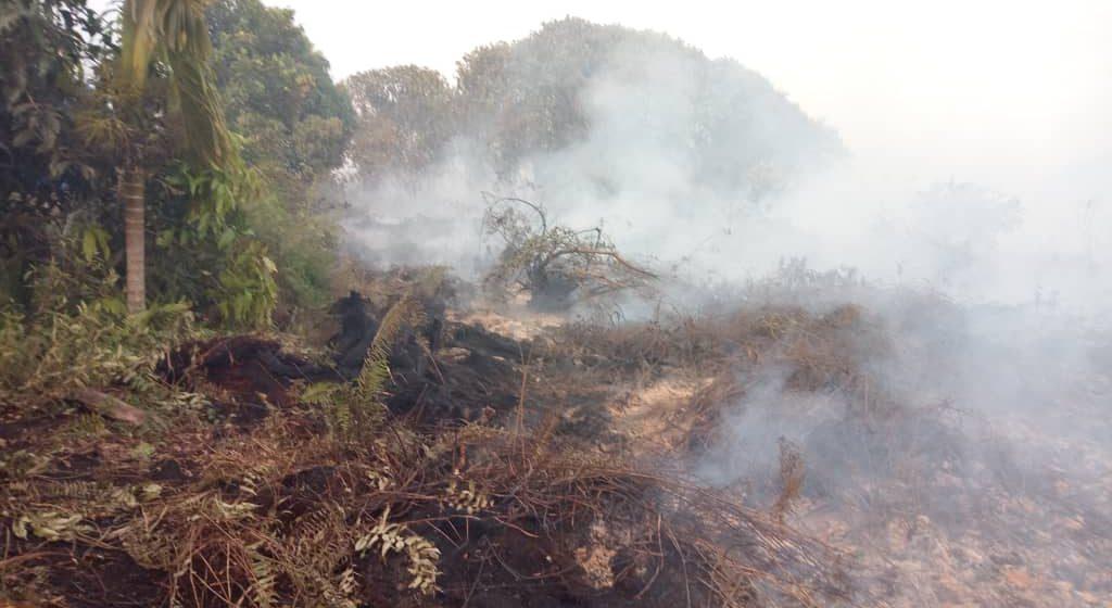 Kebakaran hutan Sedi terkawal