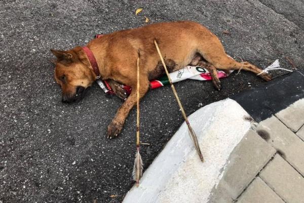 Polis buru individu panah anjing hingga mati