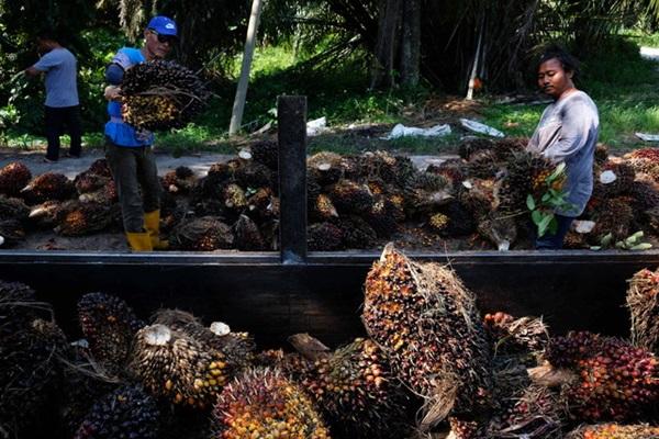 Kilang kelapa sawit diingatkan patuhi had pelepasan BOD