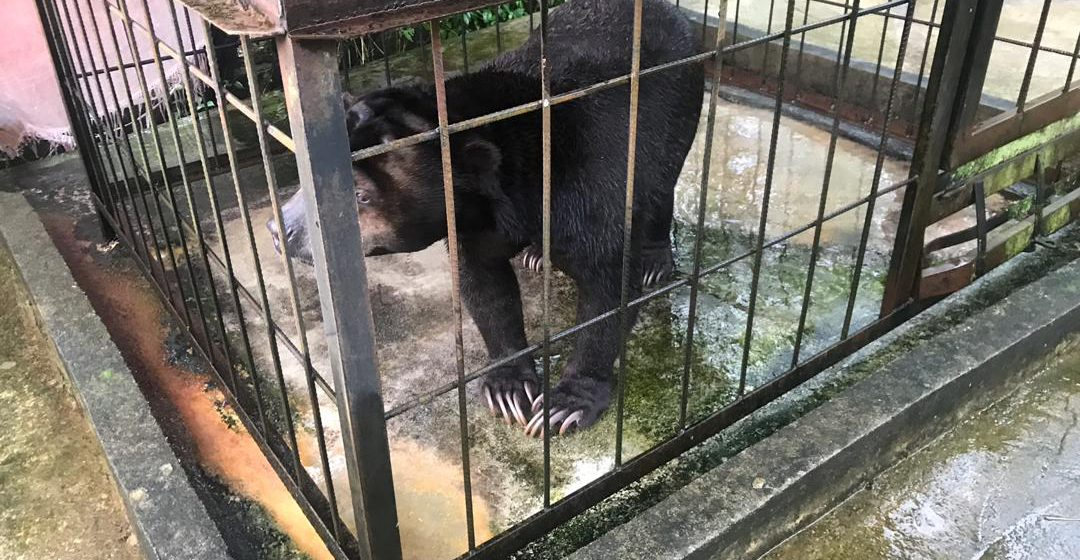 Beruang Madu dipelihara hampir 20 tahun ditemui di Serian