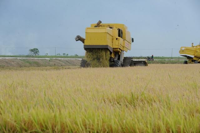 Pecah monopoli padi dan beras perkasa usahawan Bumiputera – MTEM