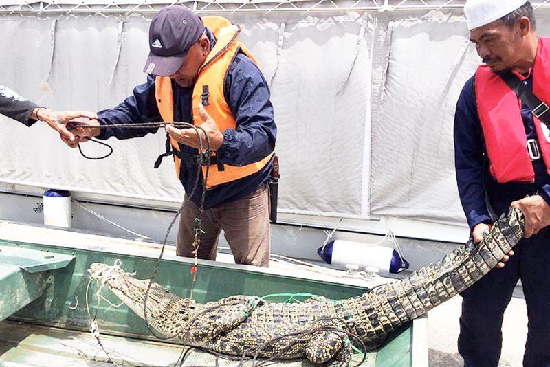 Sarawak bakal bina satu lagi pusat rehabilitasi haiwan liar
