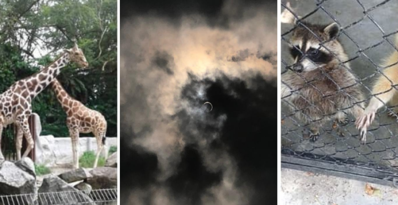 Gerhana matahari pengaruhi perilaku haiwan