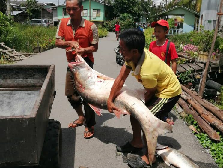 Ikan malang beri rezeki RM950
