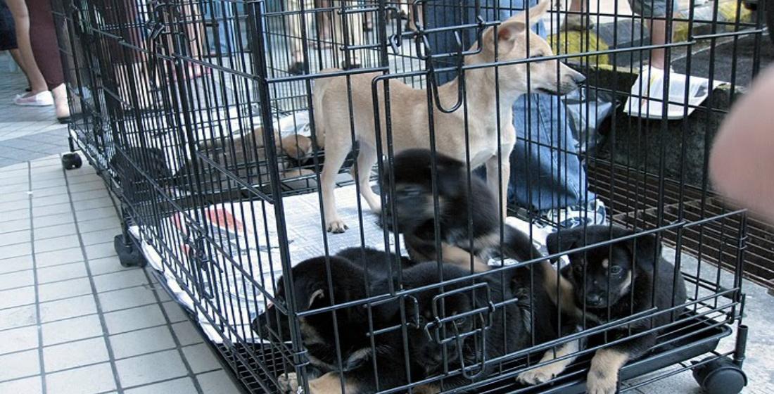 Buka klinik pemandulan kucing, anjing atasi rabies