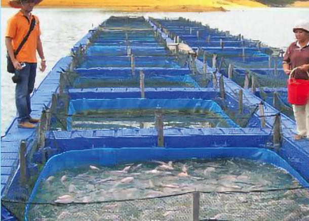Beri jaminan bekal ikan tanpa rasa lumpur