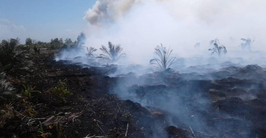 Beberapa ladang sawit terbakar