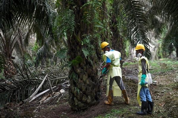 Pemilik ladang sawit di Sarawak wajib serah nama pekerja asing kepada Jawatankuasa Bencana