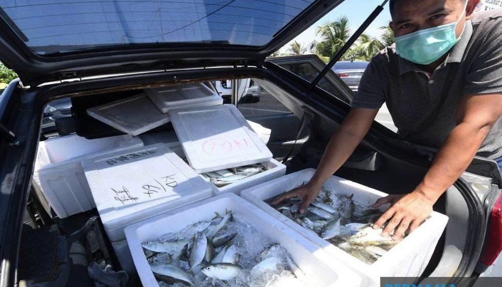 Jual ikan online
