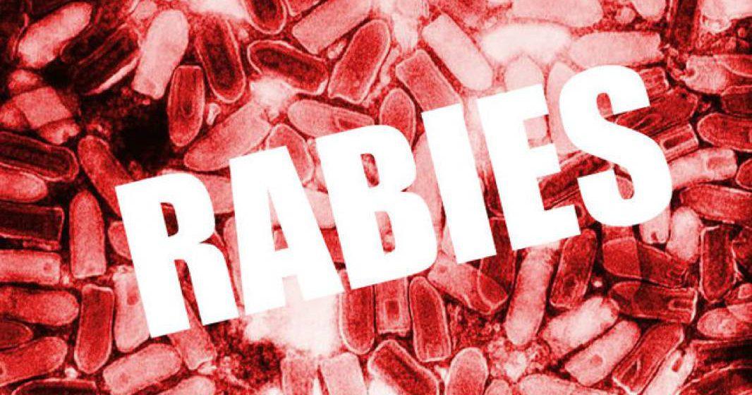 Langkah baharu basmi rabies menerusi IBET