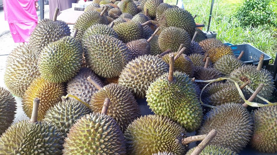 Durian Pasir Pandak pilihan pertama