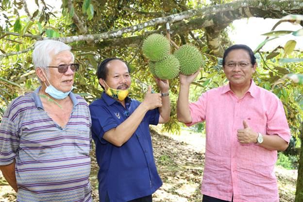 Belajar ilmu tanam durian Musang King