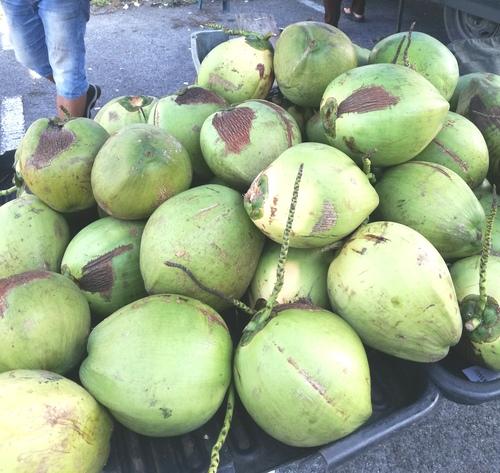 Istimewanya air kelapa Tanjung Apong