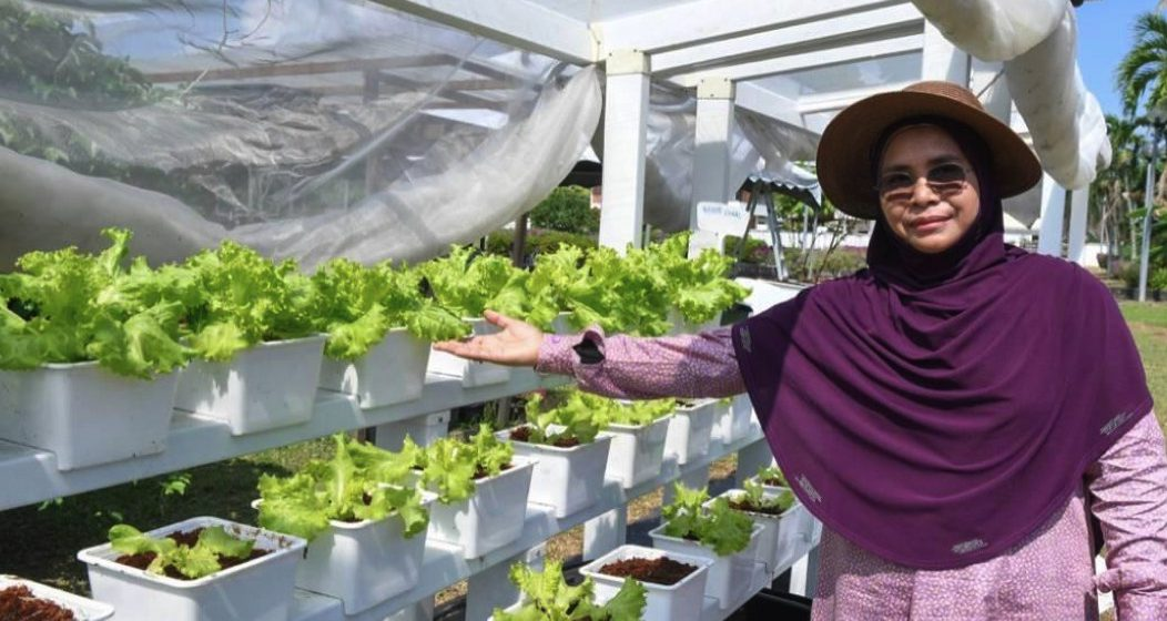 Manfaatkan kawasan terbiar, tanaman kaedah fertigasi raih pendapatan lumayan