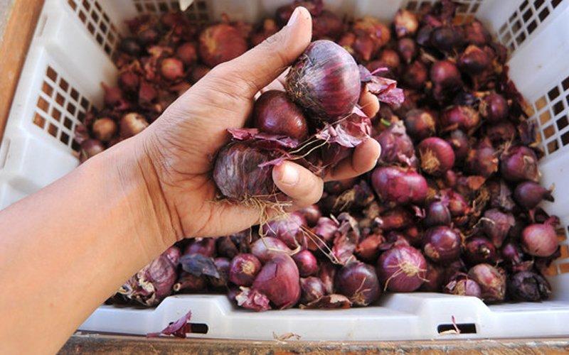 Kenaikan harga bawang dari India tidak dapat dielak berikutan tengkujuh – Rosol