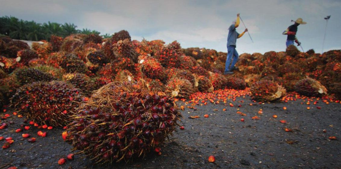 India import lebih 500,000 tan minyak sawit dari Malaysia pada Januari