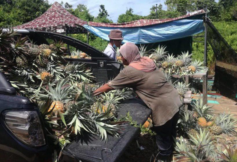 Singgah membeli nanas di simpang Tambirat