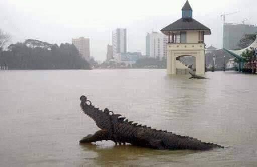 Jika terlihat buaya semasa banjir, hubungi SFC segera bukan tularkan video