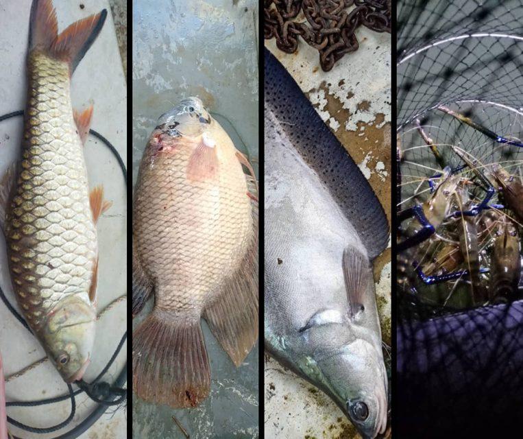 Lubuk buaya jadi lubuk memancing