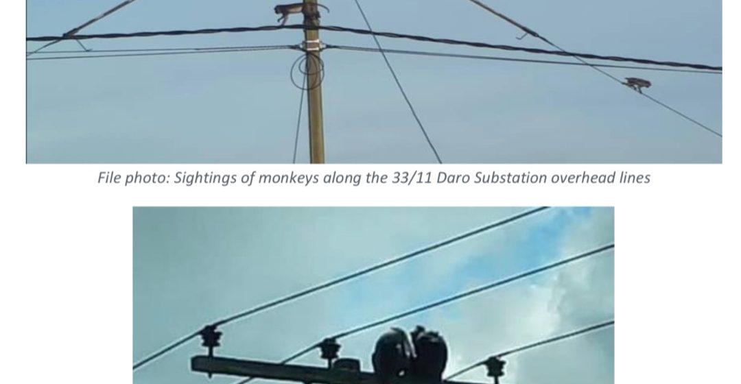 Monyet gelapkan Matu Daro