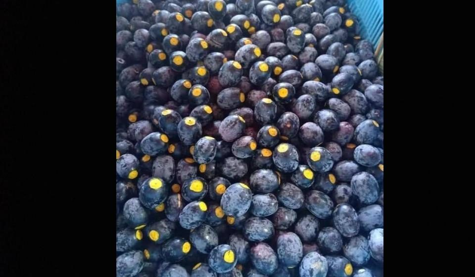 Musin dabai, peluang pedaja nambahka jereki